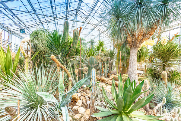 Palm trees in glasshouse Stock photo © grafvision