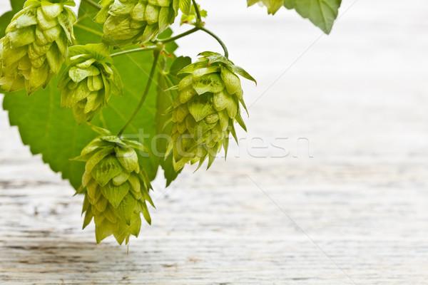 Hop verde ramoscello maturo legno sfondo Foto d'archivio © grafvision