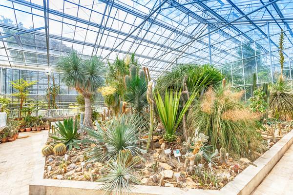 Palmeira cacto estufa paisagem folha jardim Foto stock © grafvision