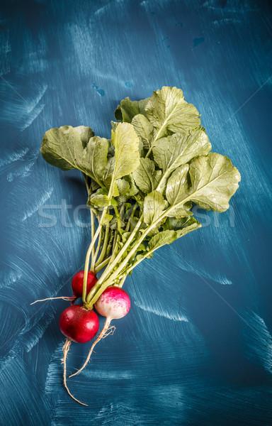 Photo stock: Fraîches · radis · laisse · bleu · alimentaire