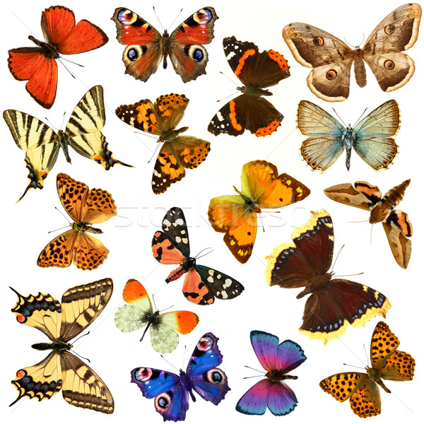 Butterfly group Stock photo © grafvision