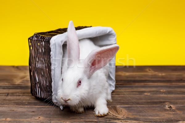 Rabbit in wicker basket Stock photo © grafvision