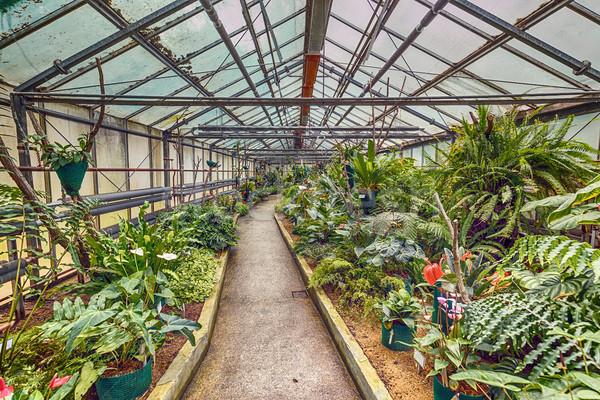 Botanic glasshouse building Stock photo © grafvision