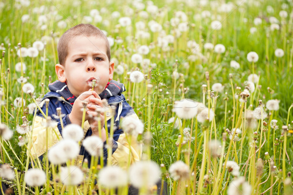 Fiú fúj pitypang óvodás természet virág Stock fotó © grafvision
