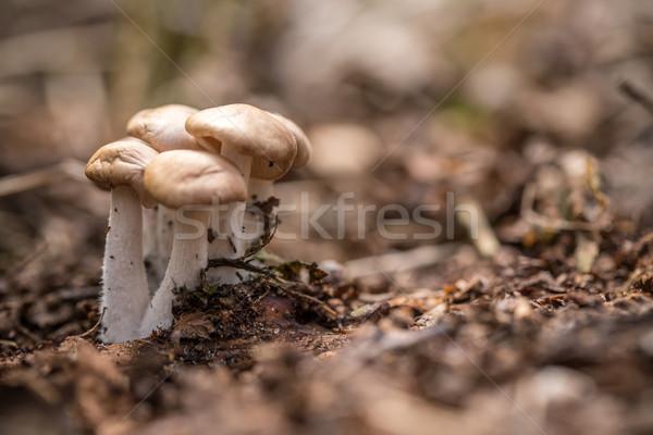 Pequeno cogumelos espaço floresta plantas cair Foto stock © grafvision