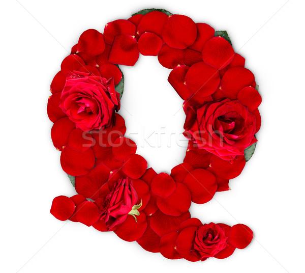 буква q красные розы лепестков изолированный белый цветок Сток-фото © grafvision