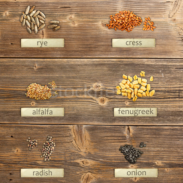 Different seeds Stock photo © grafvision