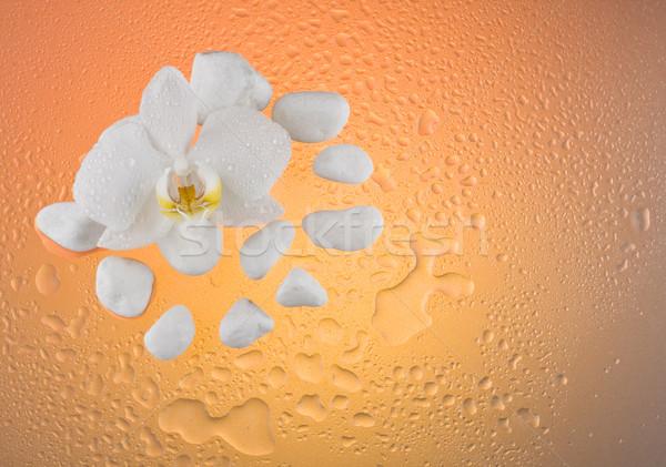 Zambak çiçek beyaz taşlar su damlası arka plan Stok fotoğraf © grafvision