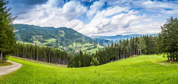 Pino foresta cielo erba salute sfondo Foto d'archivio © grafvision