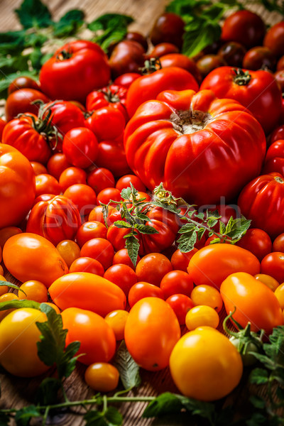 Freshly harvested tomatoes Stock photo © grafvision