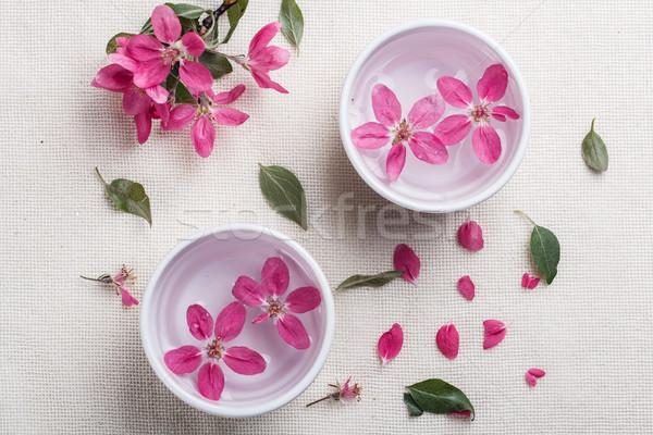 Plum tree flower Stock photo © grafvision