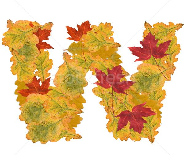 紅葉 手紙 アルファベット ツリー 自然 ストックフォト © grafvision