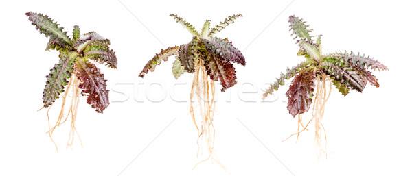 Prickly plant  Stock photo © grafvision