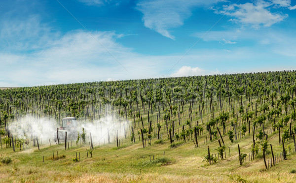 Tractor spraying vineyard Stock photo © grafvision