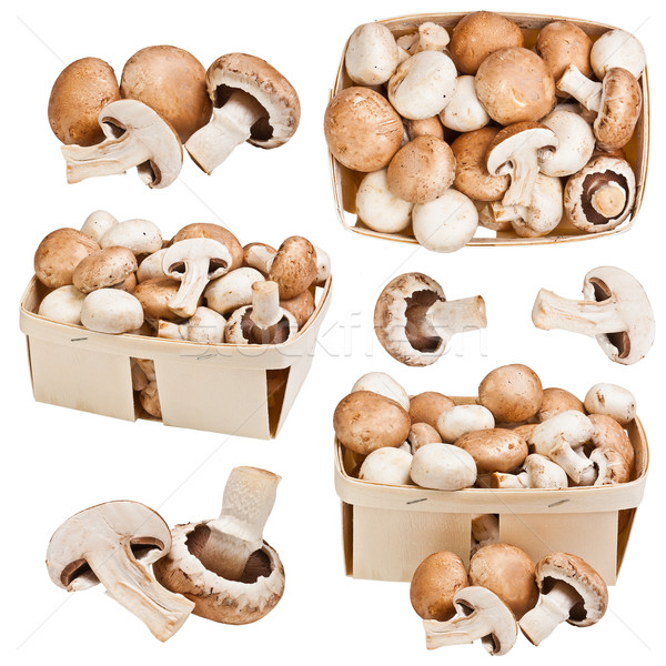 Champignons Stock photo © grafvision