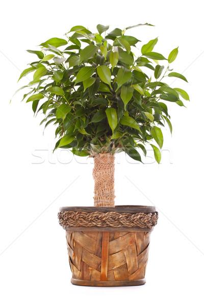 Small tree Stock photo © grafvision