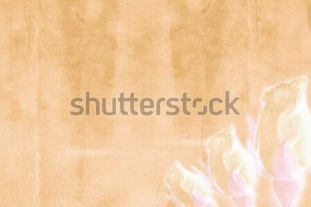 paper texture Stock photo © grafvision
