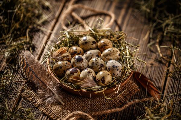 Fresh quail egg Stock photo © grafvision