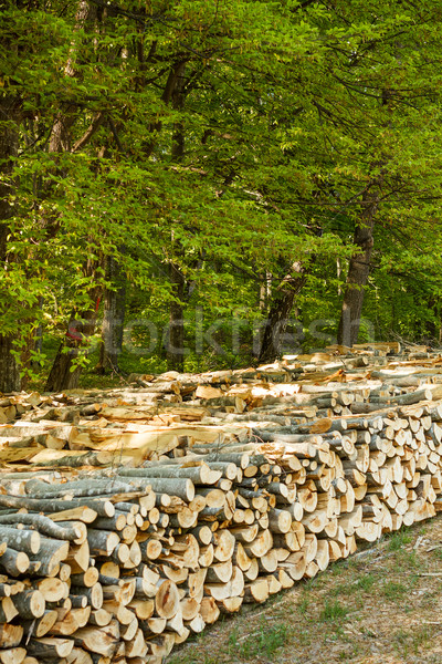 Zdjęcia stock: Cięcia · drzew · lasu · tekstury