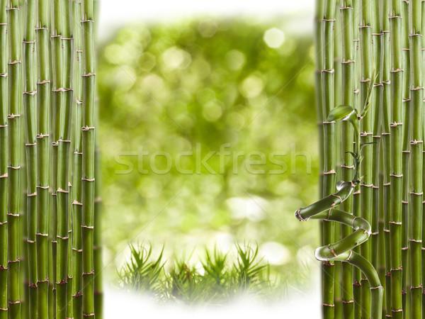 Bamboo Border  Stock photo © grafvision