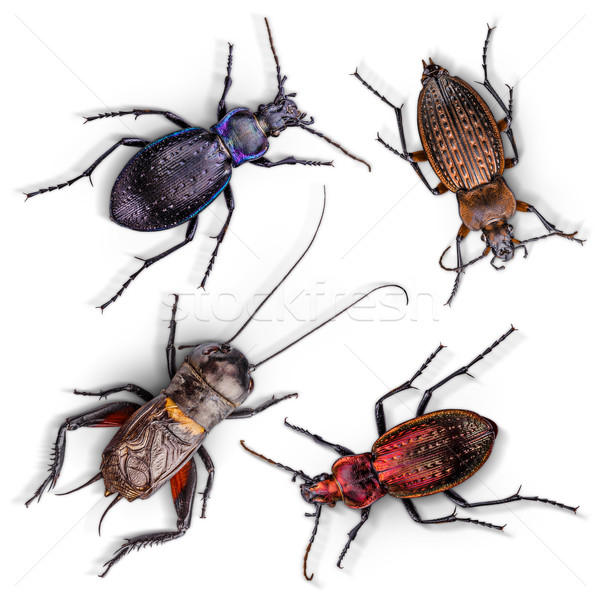 Conjunto insetos branco vermelho cor voar Foto stock © grafvision