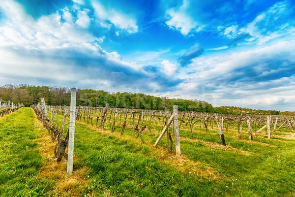 Primavera temporada vino granja de uva Foto stock © grafvision