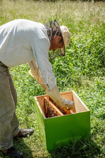Beekeeper  Stock photo © grafvision
