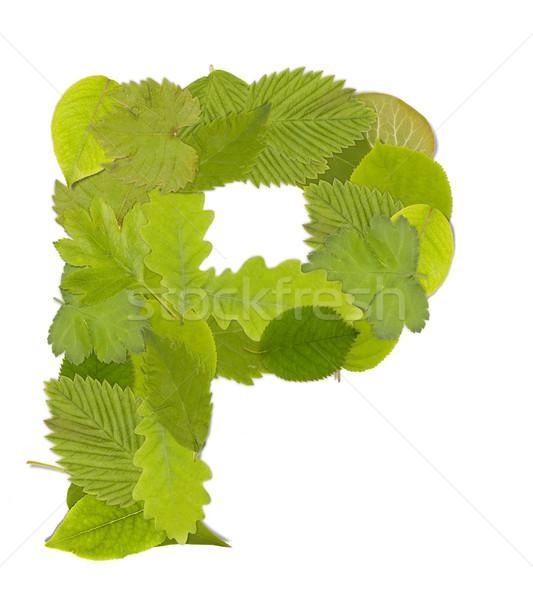 Yeşil yaprak mektup beyaz ağaç Stok fotoğraf © grafvision