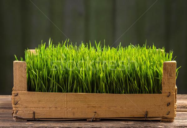 小さな 緑 小麦 木製 水 ストックフォト © grafvision