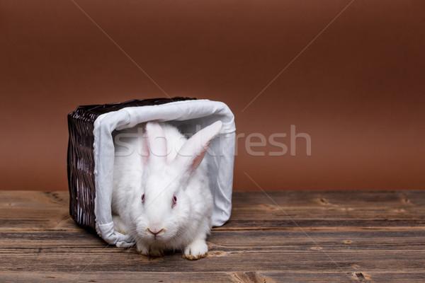 White rabbit Stock photo © grafvision