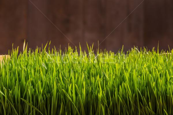 Wheat grass Stock photo © grafvision