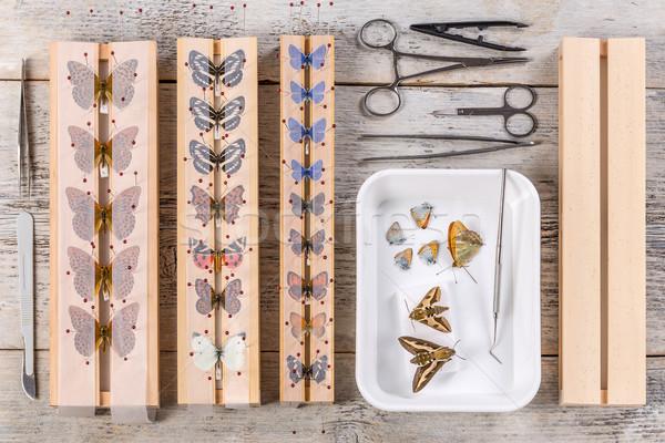 бабочки инструменты используемый жизни инструментом среде Сток-фото © grafvision