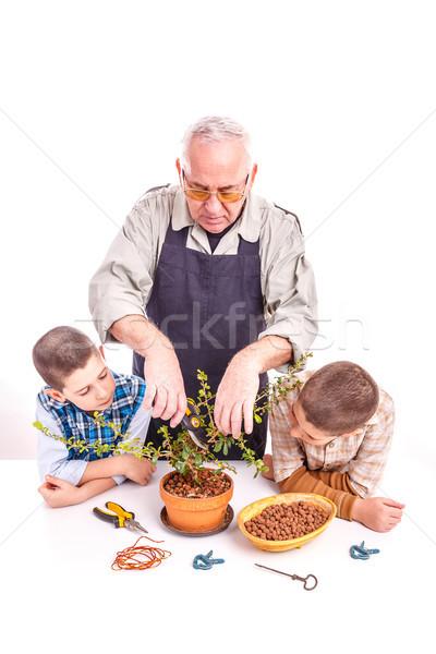 Senior homem netos cuidar bonsai Foto stock © grafvision