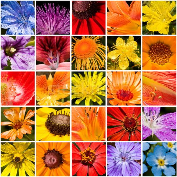 цветок панель коллаж лет зеленый цвета Сток-фото © grafvision