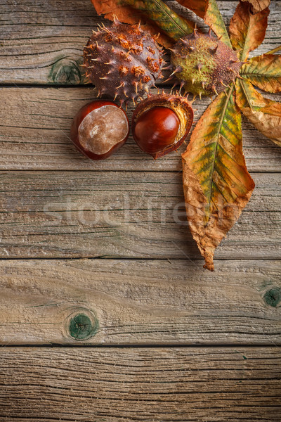 свежие лес фон осень Сток-фото © grafvision