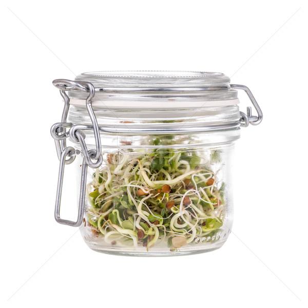 Fresh sprouts Stock photo © grafvision