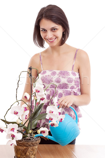 Woman watering orchid Stock photo © grafvision