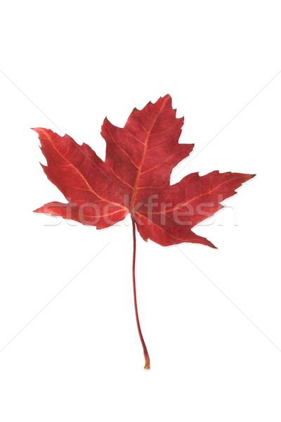 Leaf Stock photo © grafvision