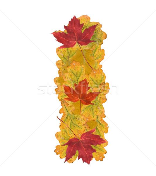 Sonbahar yaprakları mektup alfabe mektup i ağaç doğa Stok fotoğraf © grafvision