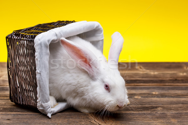 ウサギ バスケット 古い 木板 黄色 ストックフォト © grafvision