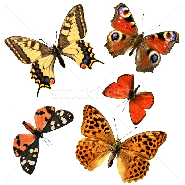 Stock photo: Butterfly group