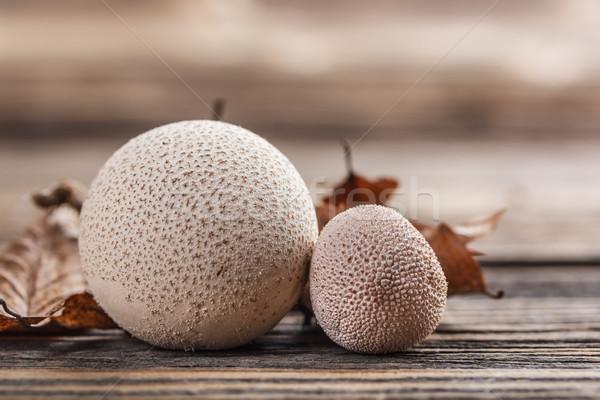 Common puffball Stock photo © grafvision