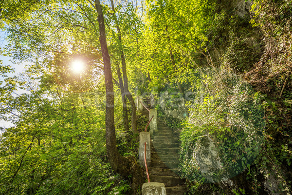 Pierre escaliers chemin forêt arbre paysage Photo stock © grafvision