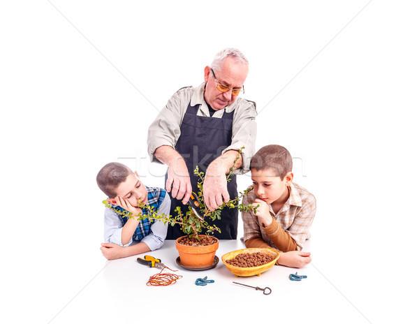 Heureux supérieurs homme petits enfants bonsaï arbre Photo stock © grafvision