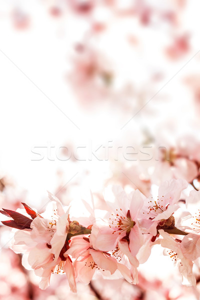 Flor-de-rosa ramo belo flor primavera natureza Foto stock © grafvision