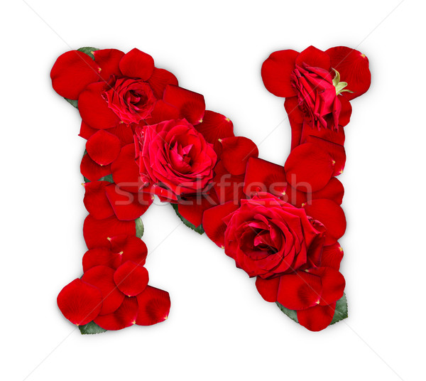 N betű vörös rózsák szirmok izolált fehér virág Stock fotó © grafvision
