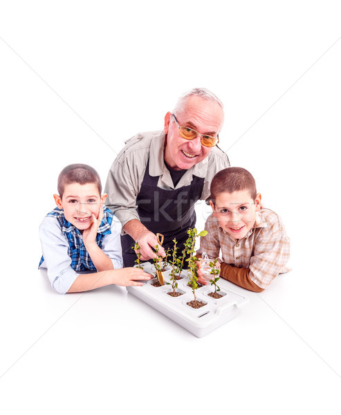 Senior Mann Enkelkinder Pflanzung Bonsai Baum Stock foto © grafvision