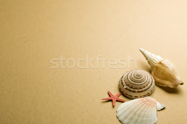 seashell Stock photo © grafvision