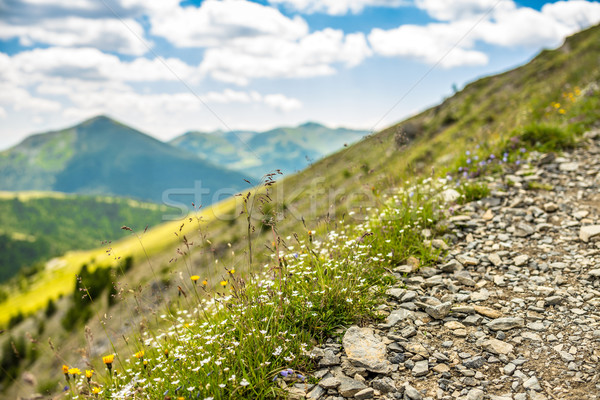 Vad virágok hegy fű természet tájkép nyár Stock fotó © grafvision