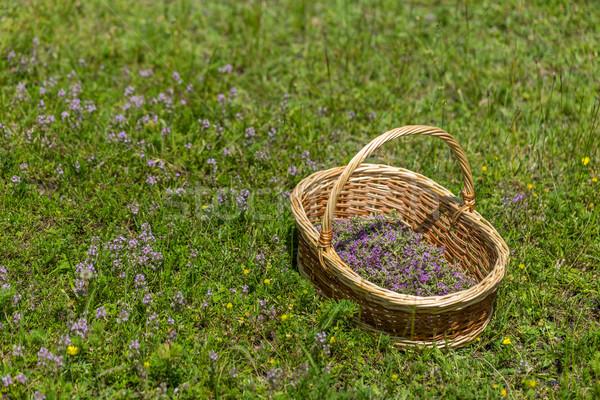 Florescimento orégano prado flor verão Foto stock © grafvision